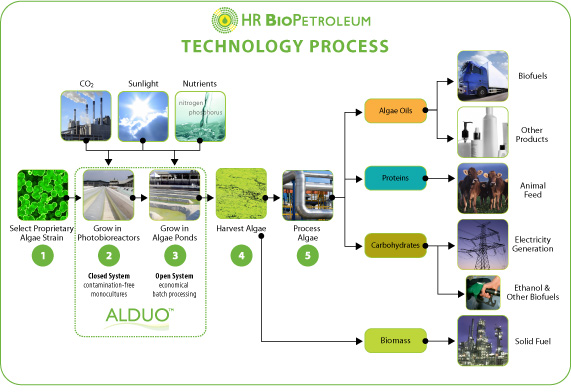 Biofuel From Algae. Algae-to-Biofuel Tech Gets a