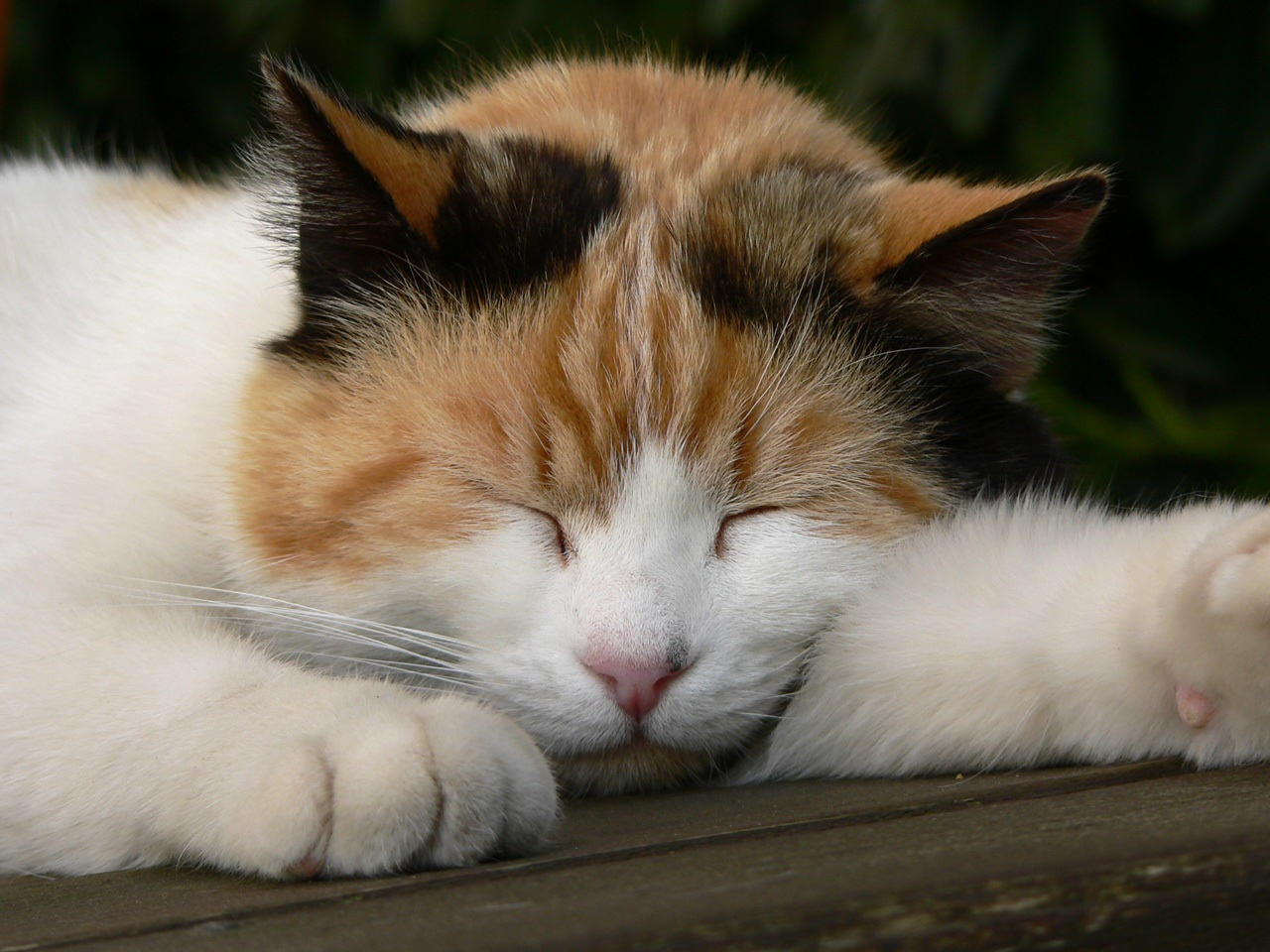 tobramycin eye drops for cats