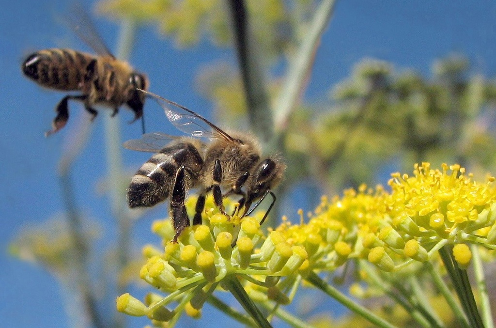 Managing Electric Vehicles Like a Swarm of Bees