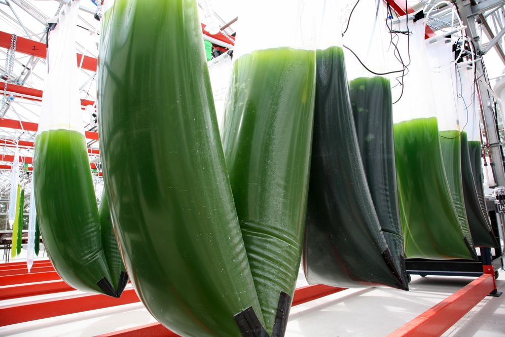 PHOTOS: Exxon, Synthetic Genomics Open Algae Test Facility