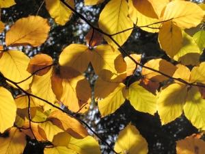 1318569_bright_autumn
