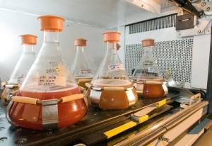 Biofuel_Argonne