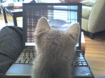 cat-video