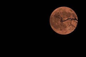 Smoke-colored moon