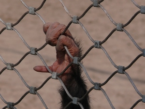 Monkey in the cage