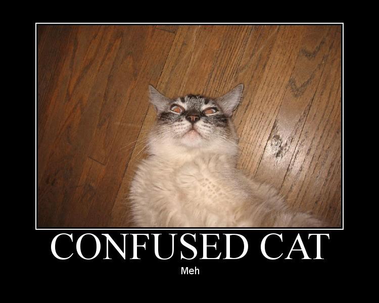 confusedcat