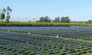 Westlands Solar Farms