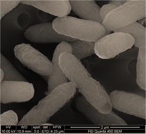 Genomatica_Organisms_1