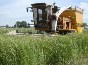 biofuelsQ3
