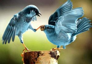 Twitter birds fighting