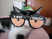 x-ray specs cat_i eated a cookie