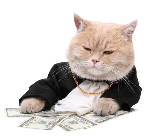 Fat cat, money