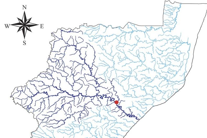cholera copy