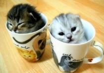Buzzfeed cats
