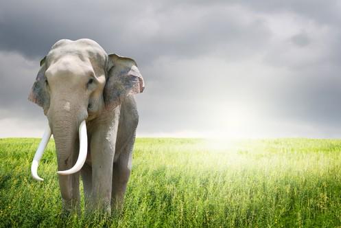 Elephant sunlight