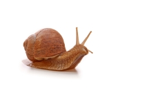 snail slow stagnation