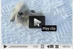 Wiki Video