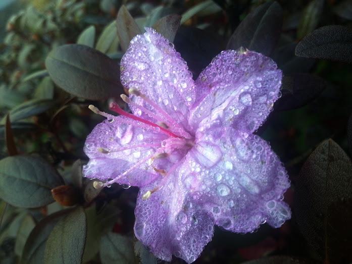 Snapseed flower
