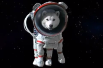 Otosan Softbank spokesman dog space