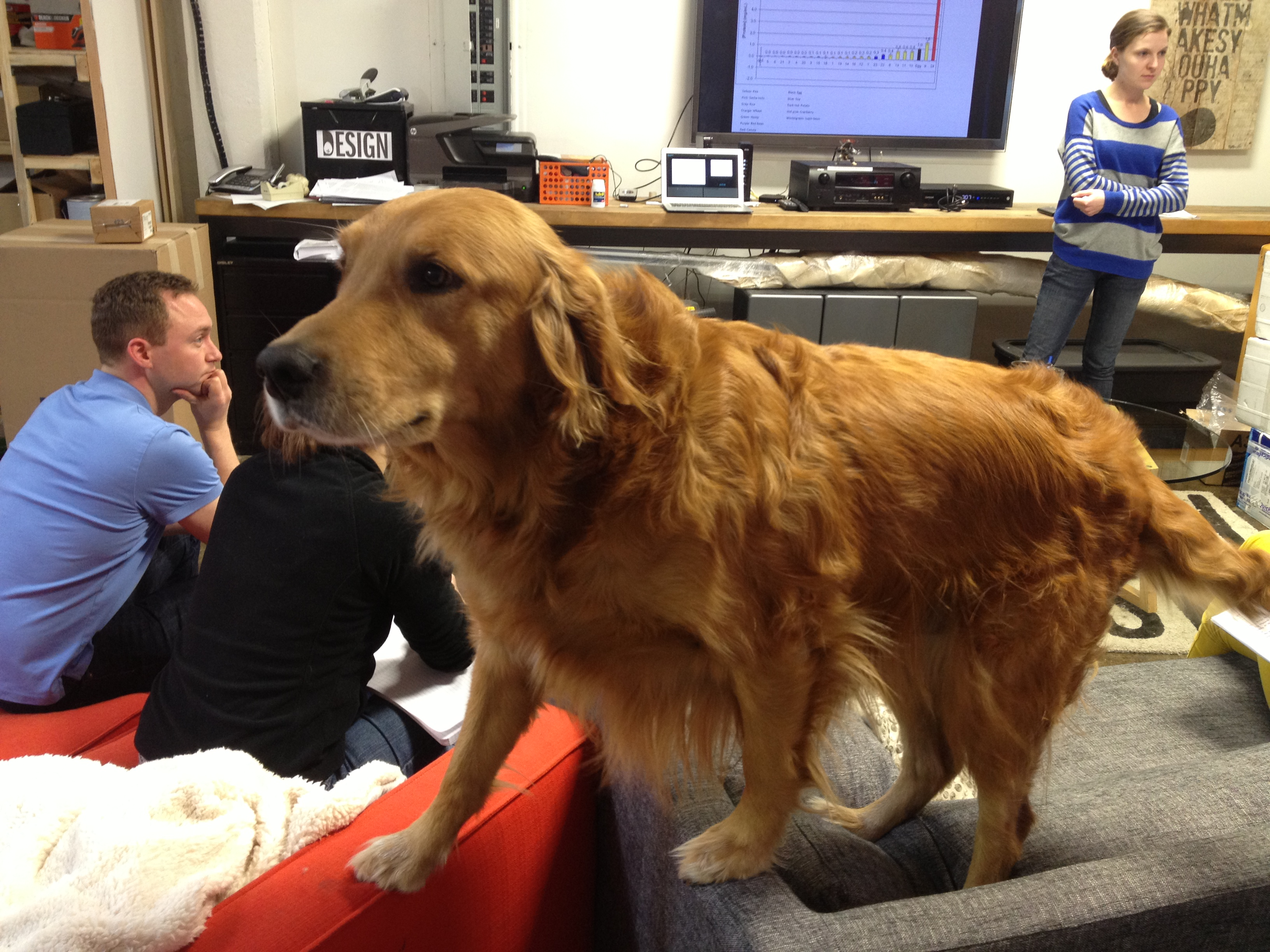 Jake the golden retriever and unofficial Hampton Creek Foods mascot