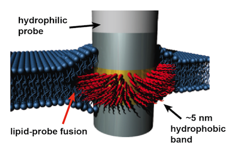 electrode band schematic