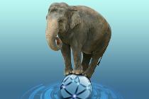 Elephant_210x140