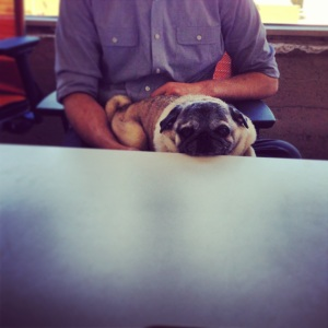 Modcloth CEO Eric Koger with the company's mascot Winston the pug on his lap.