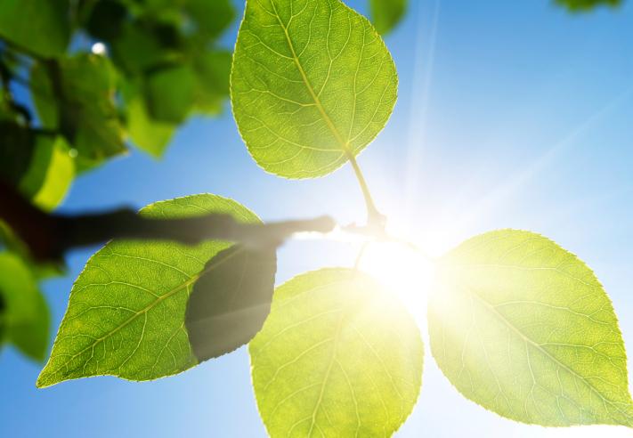 sun-leaf-plant