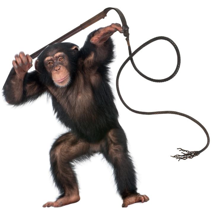 Conformity-Monkey