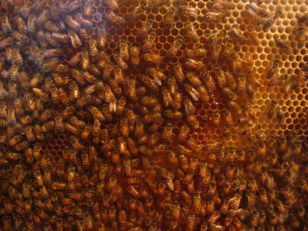Bee hive flickr Orin Zebest 1517422269_303463392c_b