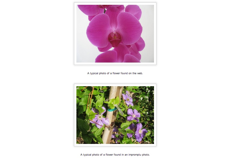 Google's system can recognize flowers even when they're not in the focal point.