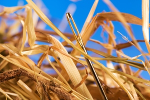 needle in haystack