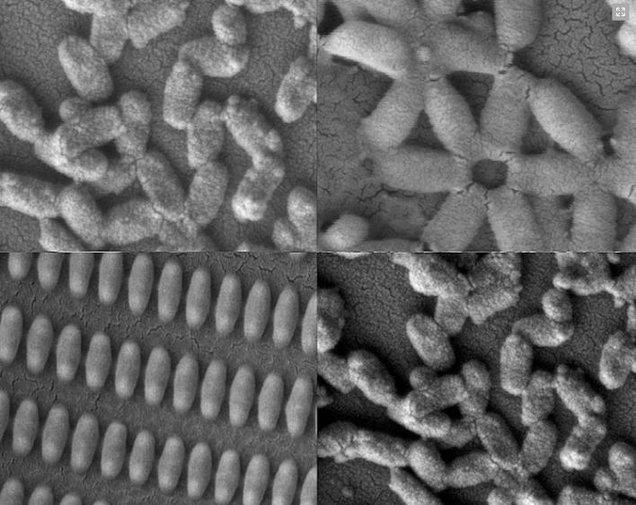 Coated nanomolecules