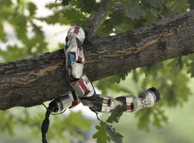 Robotic snake in a tree