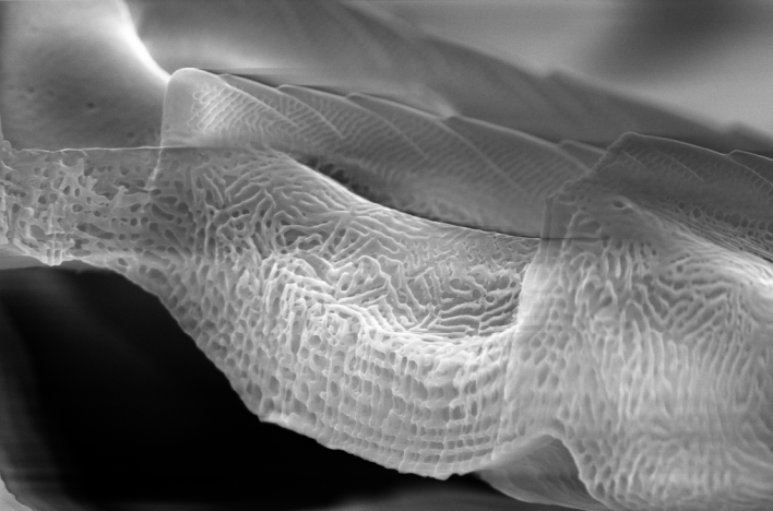 Butterfly wing nanostructures