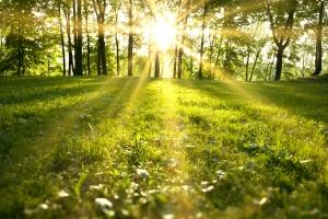 Sunlight, sun, forest