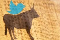 Twitter stock market bull generic