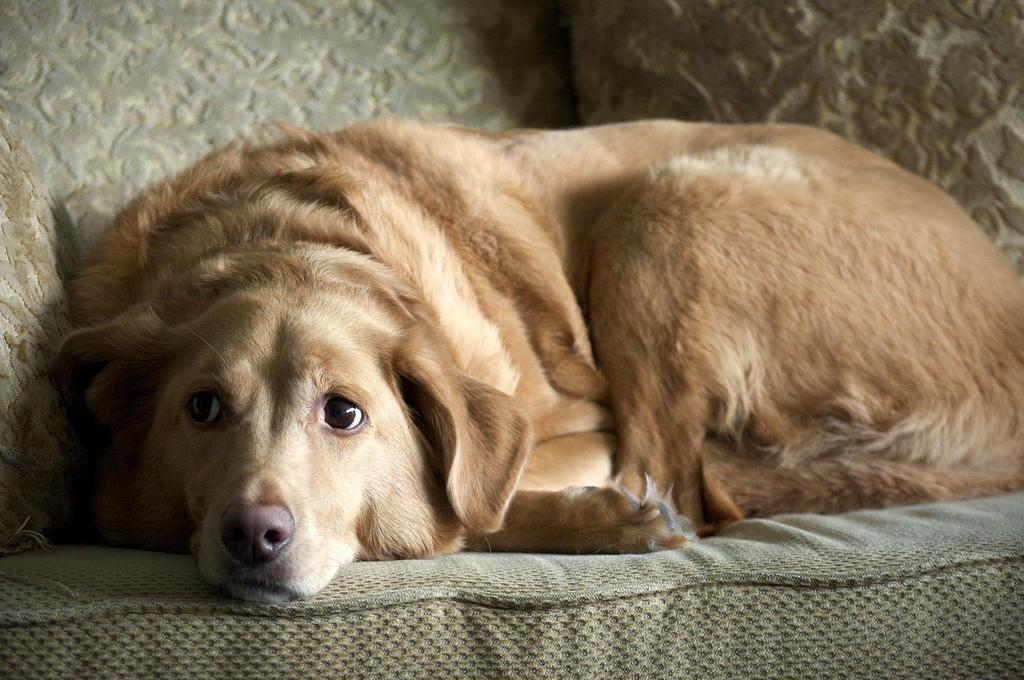 Dog sad face