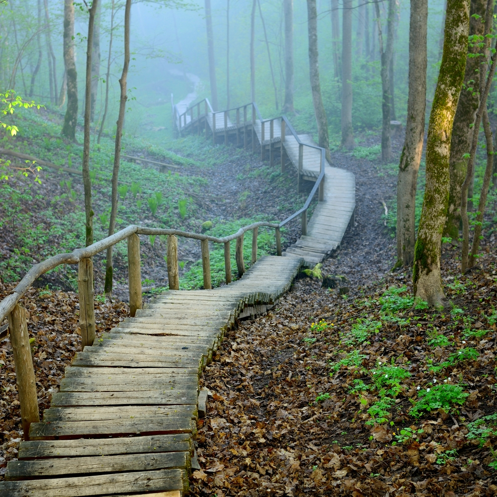 Stairs, fading, forest, disappear