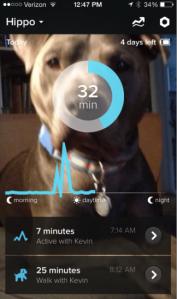 Whistle Screenshot Hippo 2