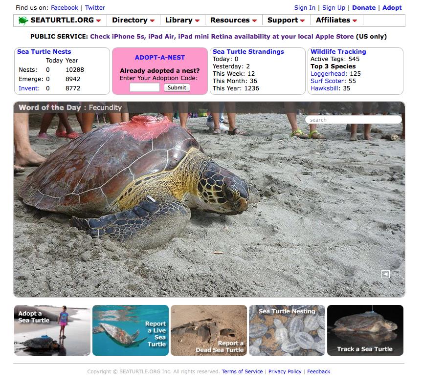 Sea Turtle site with iPad mini retina tool