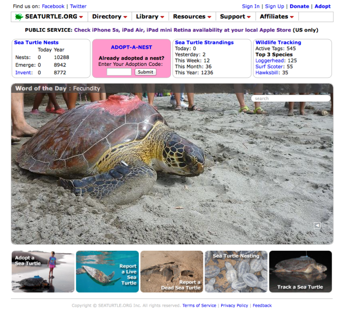 Sea Turtle site with iPad mini retina tool