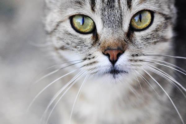 Cat kitten whiskers