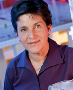 Stanford biology professor Deborah Gordon