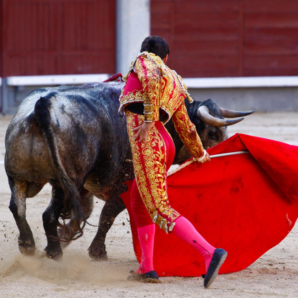 Bull, bull fight, red flag