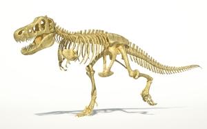 Dinosaur skeleton bones