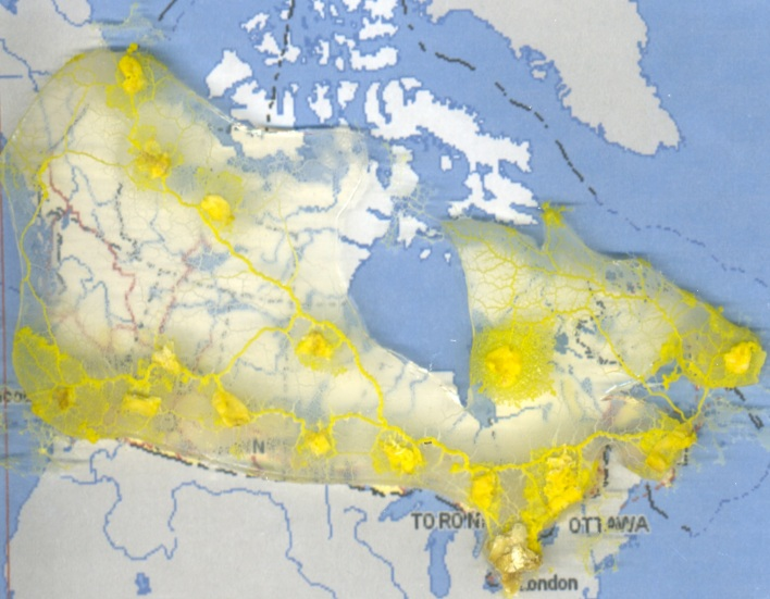 Physarum polycephalum, a type of slime mold, creates an optimized model of Canada's transportation network. Photo from: Adamatzky A., Akl S. Trans-Canada Slimeways: Slime Mould Imitates the Canadian Transport Network. IJNCR 2(4):31-46 (2011)