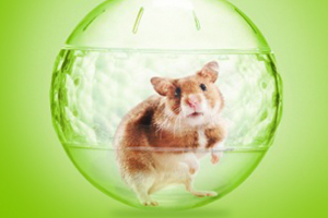 Tom Frobinson, the hamster patriarch staring in Sprint's new Framily ad campaign (source: Sprint)
