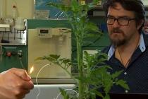 Plant torture