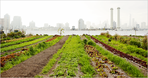 8400.CDI-Food-Resilience_496px.png-496x0